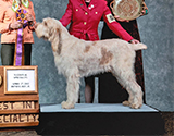 2011 National Specialty Best of Breed: