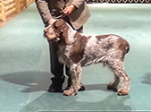 2014 National Specialty Best of Breed: