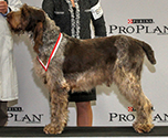2016 National Specialty Best of Breed: